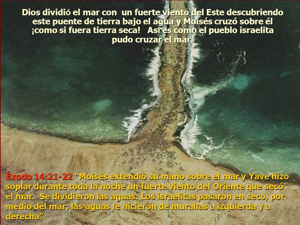 Dios dividió el mar con un fuerte viento del Este descubriendo este puente de tierra bajo el agua y Moisés cruzó sobre él ¡como si fuera tierra seca! Así es como el pueblo israelita pudo cruzar el mar.