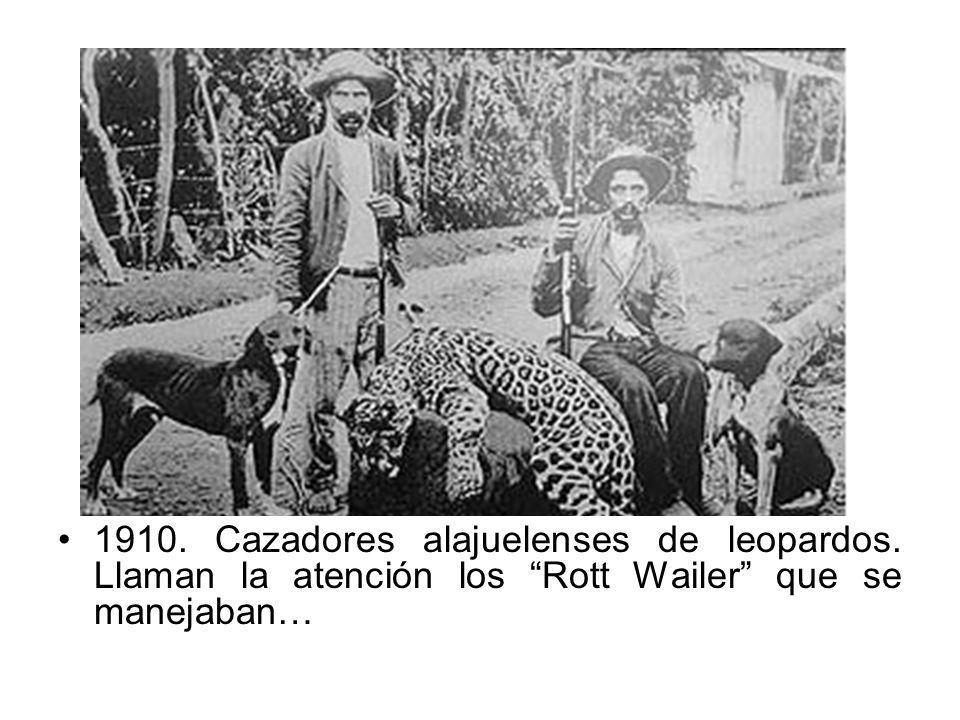 1910. Cazadores alajuelenses de leopardos