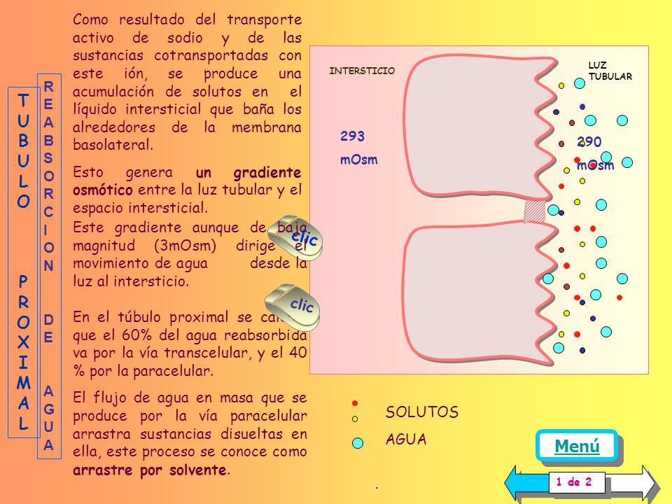 TUBULO PROXIMAL clic Menú .