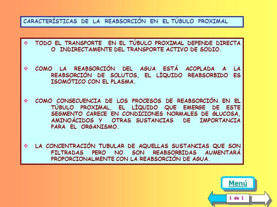 Menú CARACTERÍSTICAS DE LA REABSORCIÓN EN EL TÚBULO PROXIMAL