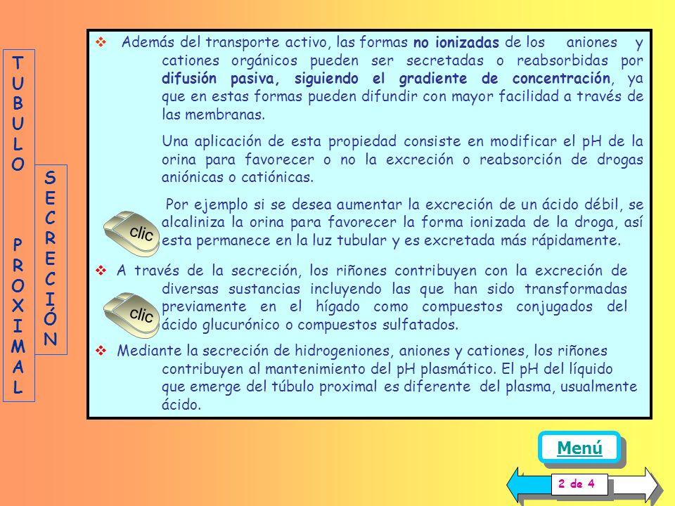 TUBULO PROXIMAL SECRECIÓN clic clic Menú