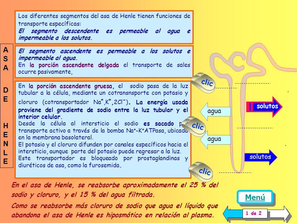 ASA DE clic HENLE . clic . clic Menú solutos agua solutos