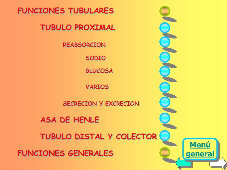 TUBULO DISTAL Y COLECTOR FUNCIONES GENERALES