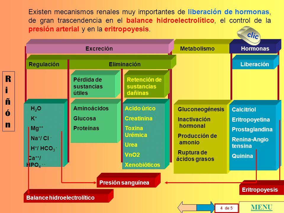Existen mecanismos renales muy importantes de liberación de hormonas, de gran trascendencia en el balance hidroelectrolítico, el control de la presión arterial y en la eritropoyesis.