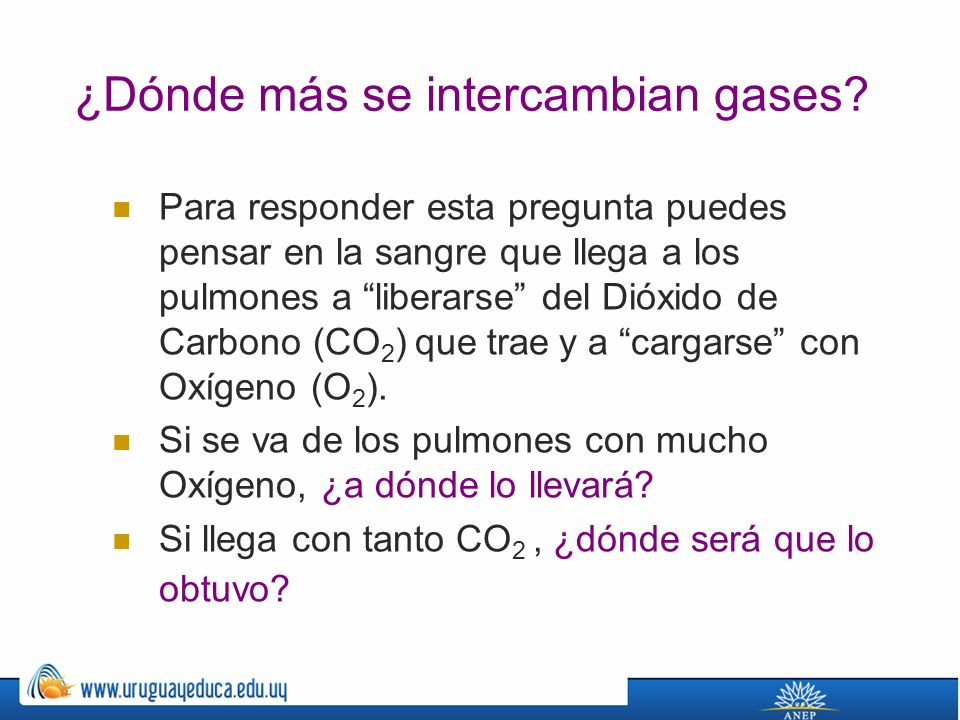 ¿Dónde más se intercambian gases