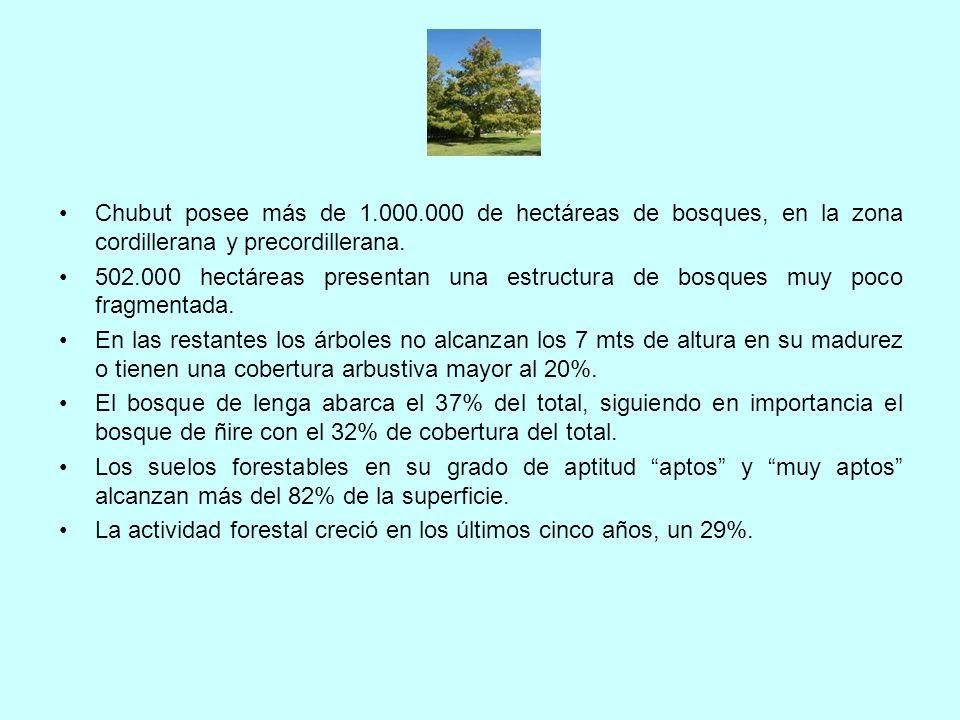 Chubut posee más de 1.000.000 de hectáreas de bosques, en la zona cordillerana y precordillerana.