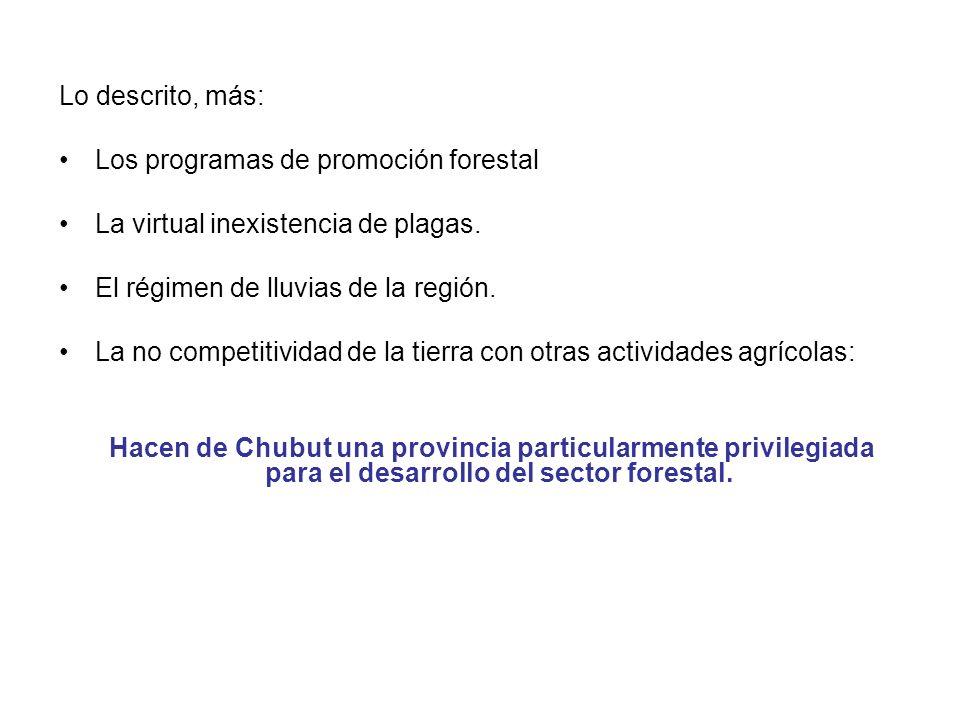 Lo descrito, más: Los programas de promoción forestal. La virtual inexistencia de plagas. El régimen de lluvias de la región.