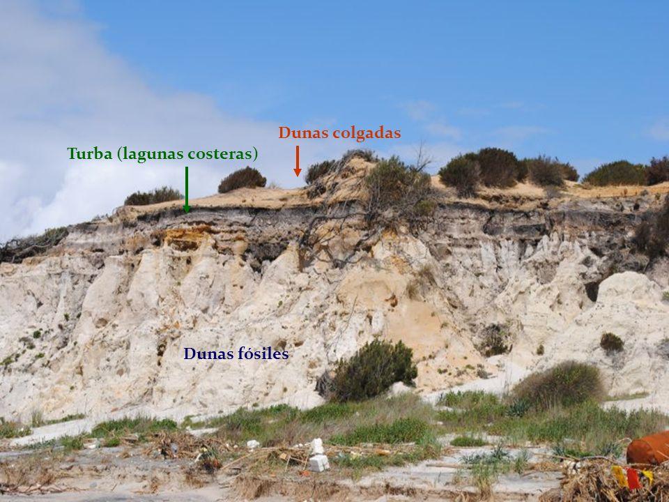 Dunas colgadas Turba (lagunas costeras) Dunas fósiles