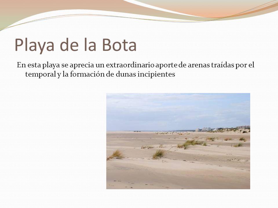 Playa de la Bota En esta playa se aprecia un extraordinario aporte de arenas traídas por el temporal y la formación de dunas incipientes.
