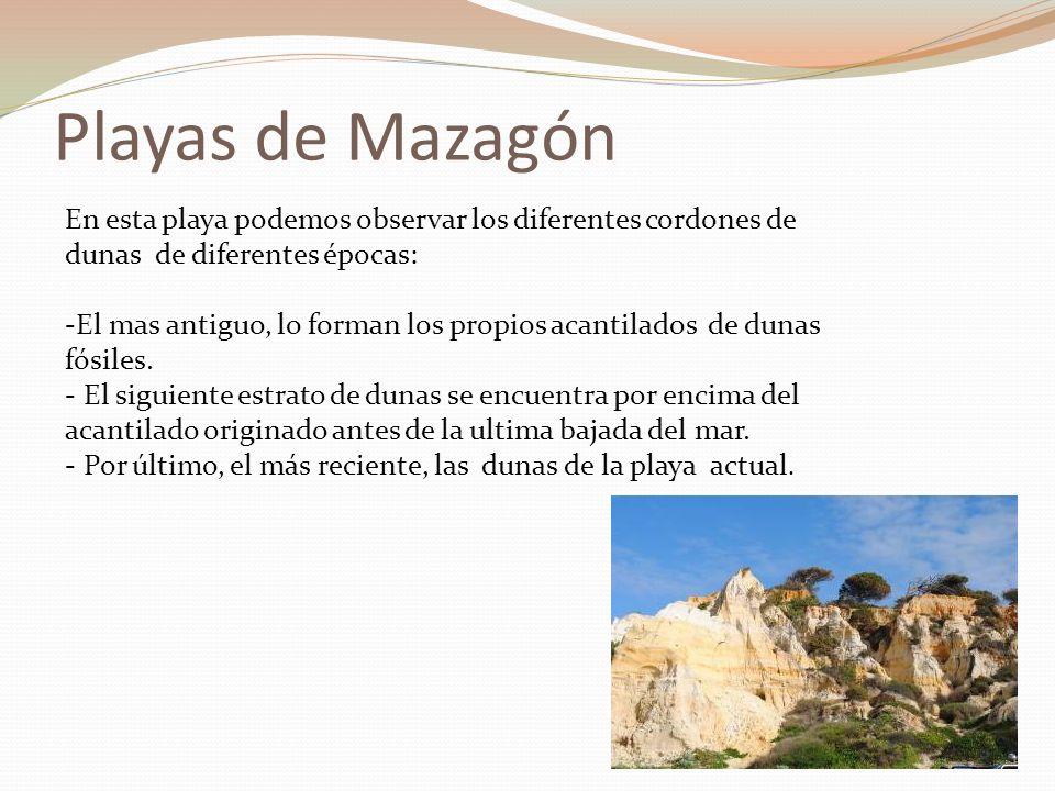 Playas de Mazagón En esta playa podemos observar los diferentes cordones de dunas de diferentes épocas: