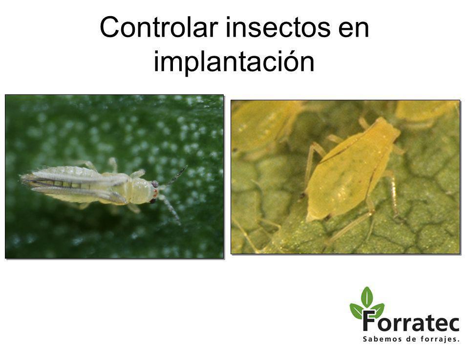 Controlar insectos en implantación
