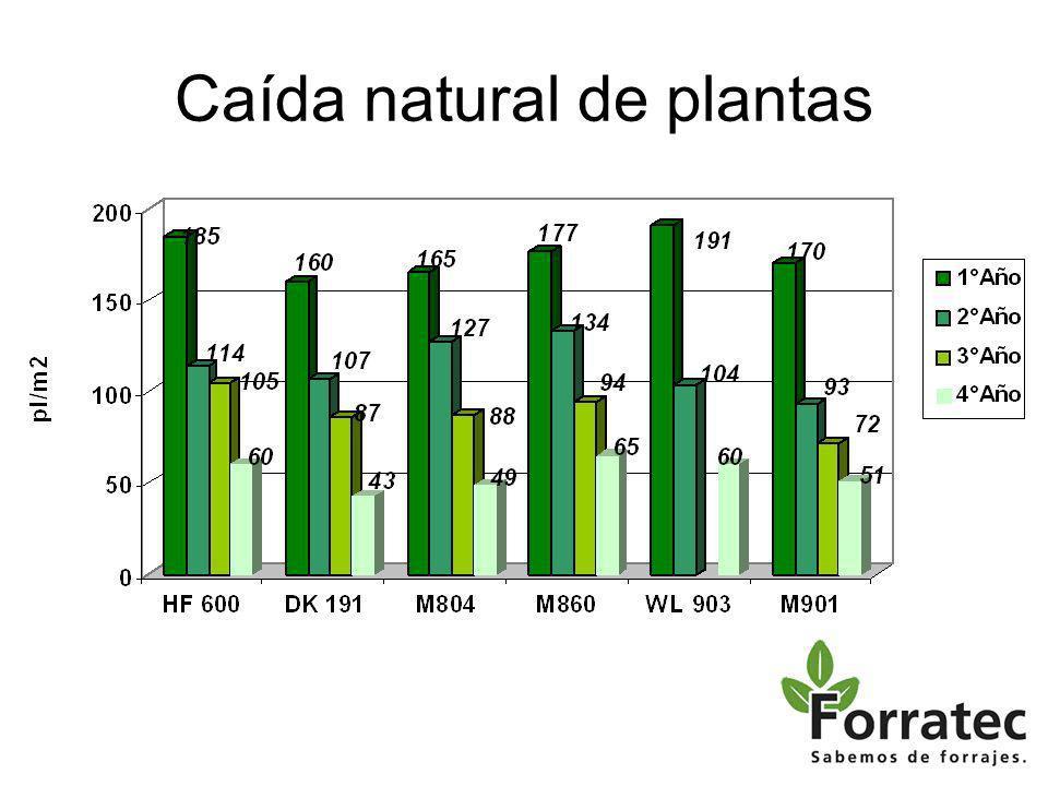 Caída natural de plantas