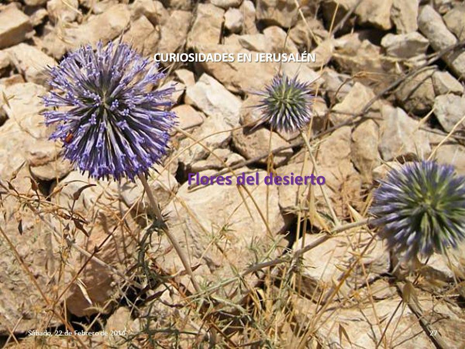 Flores del desierto CURIOSIDADES EN JERUSALÉN