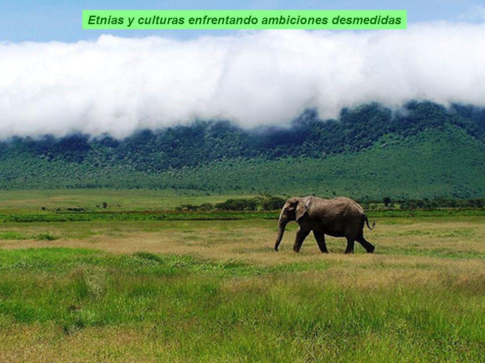 Etnias y culturas enfrentando ambiciones desmedidas
