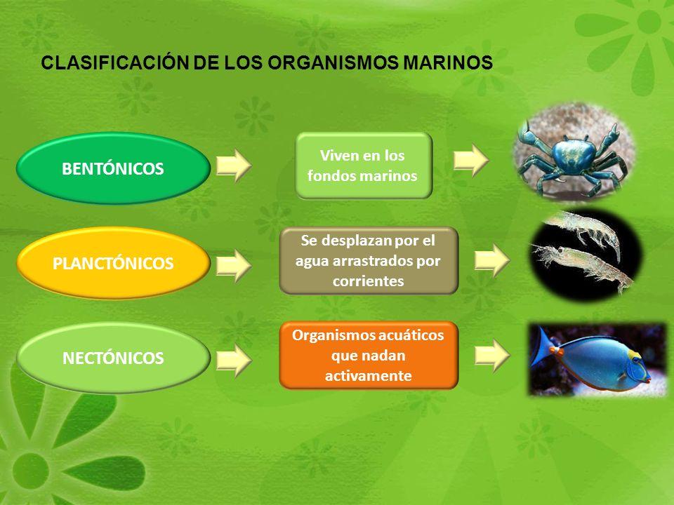 CLASIFICACIÓN DE LOS ORGANISMOS MARINOS