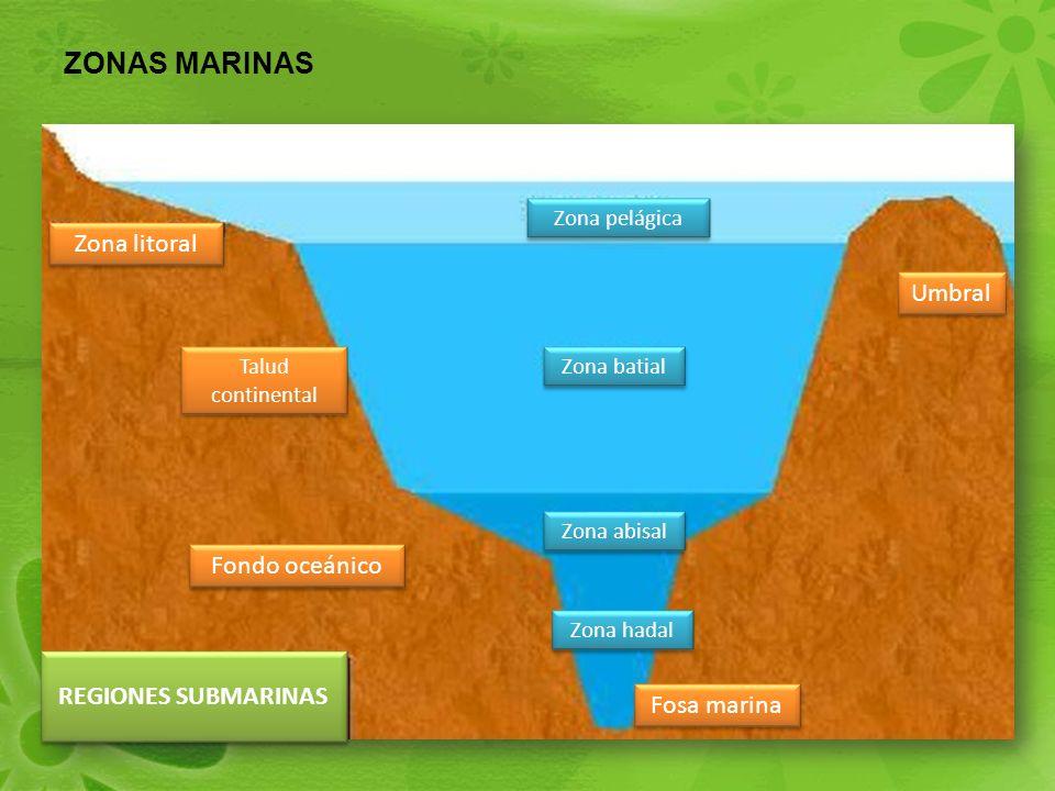 ZONAS MARINAS Zona litoral Umbral Fondo oceánico REGIONES SUBMARINAS