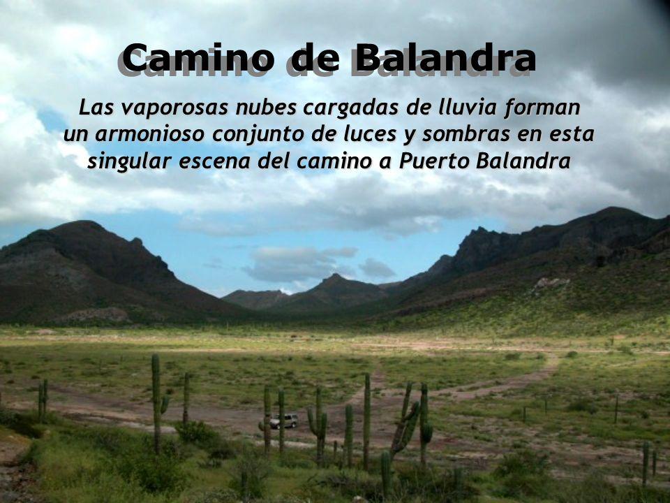 Camino de Balandra