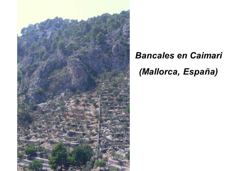 Bancales en Caimari (Mallorca, España)