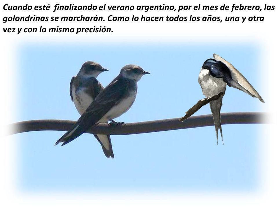 Cuando esté finalizando el verano argentino, por el mes de febrero, las golondrinas se marcharán.