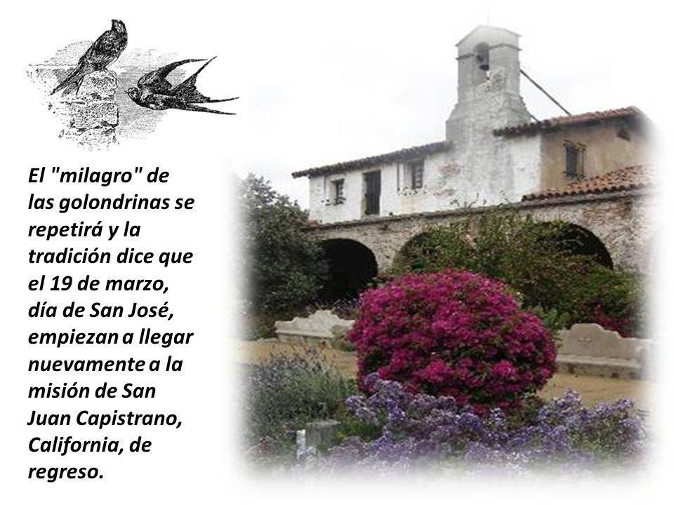 El milagro de las golondrinas se repetirá y la tradición dice que el 19 de marzo, día de San José, empiezan a llegar nuevamente a la misión de San Juan Capistrano, California, de regreso.