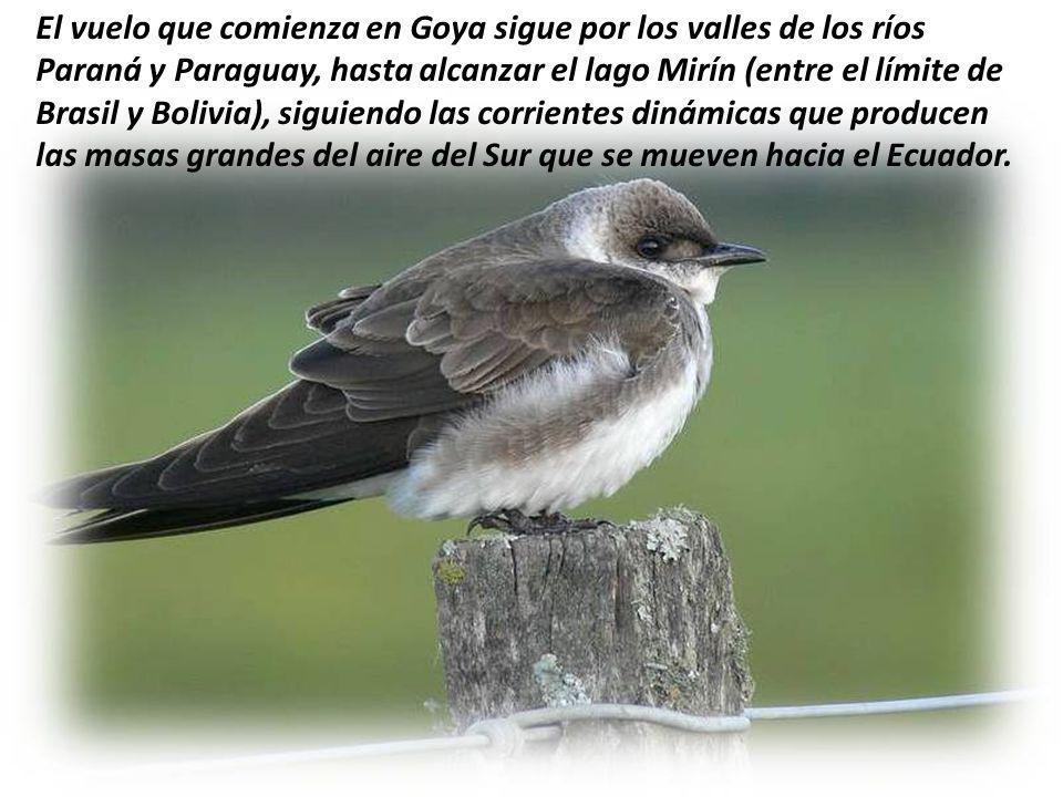 El vuelo que comienza en Goya sigue por los valles de los ríos Paraná y Paraguay, hasta alcanzar el lago Mirín (entre el límite de Brasil y Bolivia), siguiendo las corrientes dinámicas que producen las masas grandes del aire del Sur que se mueven hacia el Ecuador.