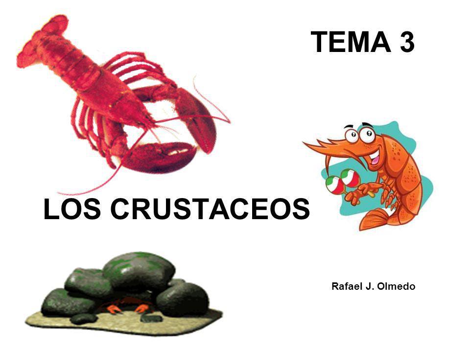 TEMA 3 LOS CRUSTACEOS Rafael J. Olmedo