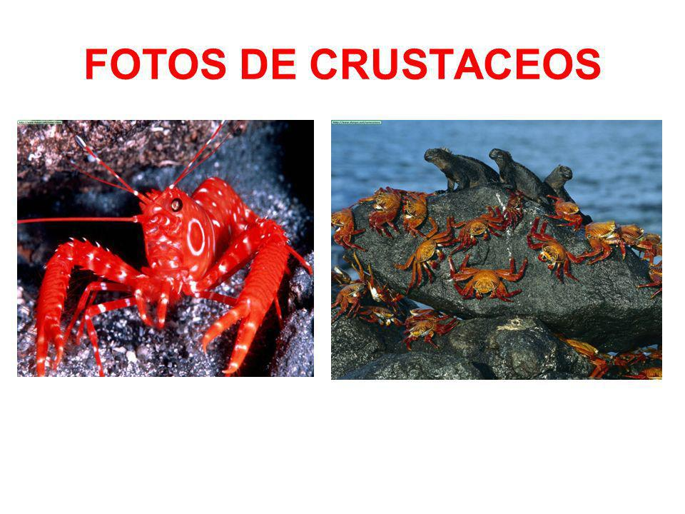 FOTOS DE CRUSTACEOS