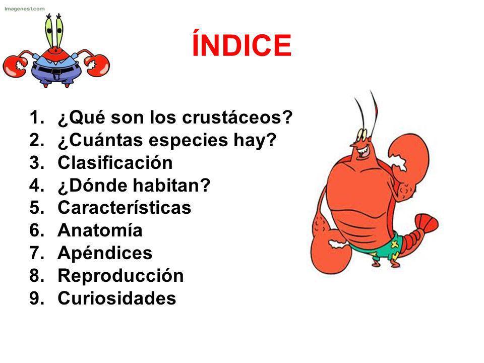 ÍNDICE ¿Qué son los crustáceos ¿Cuántas especies hay Clasificación