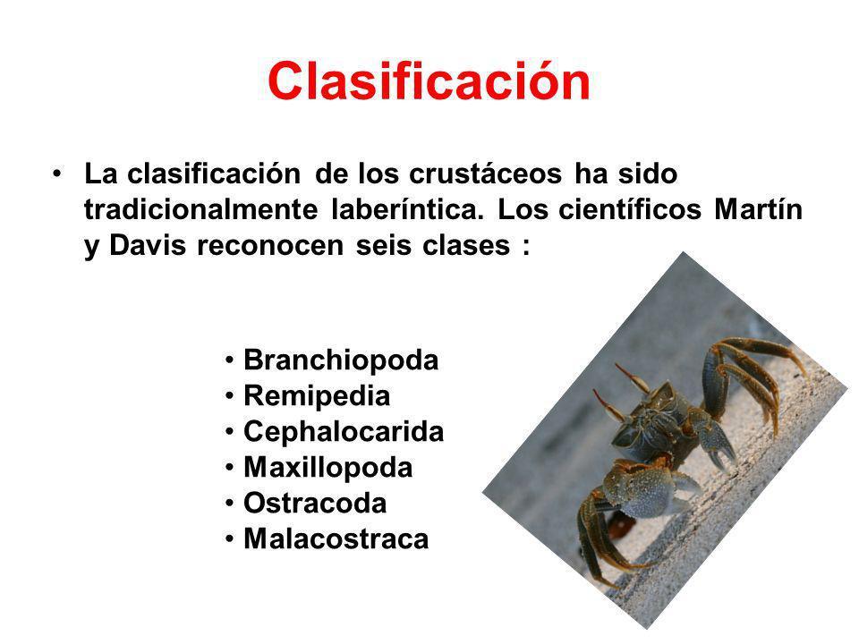 Clasificación La clasificación de los crustáceos ha sido tradicionalmente laberíntica. Los científicos Martín y Davis reconocen seis clases :