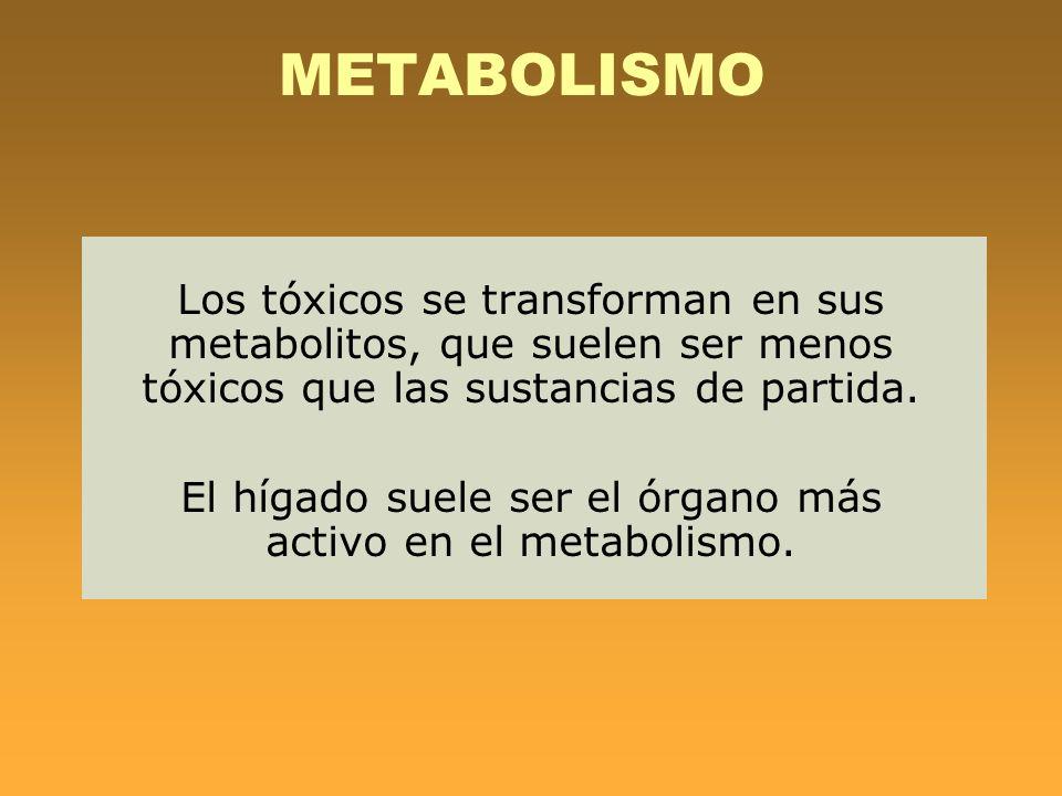 El hígado suele ser el órgano más activo en el metabolismo.