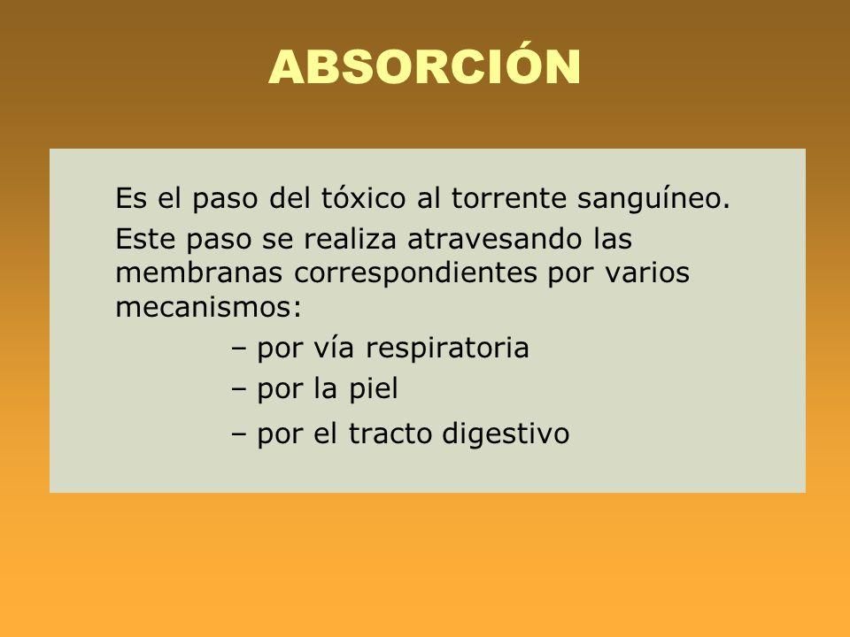 ABSORCIÓN Es el paso del tóxico al torrente sanguíneo.