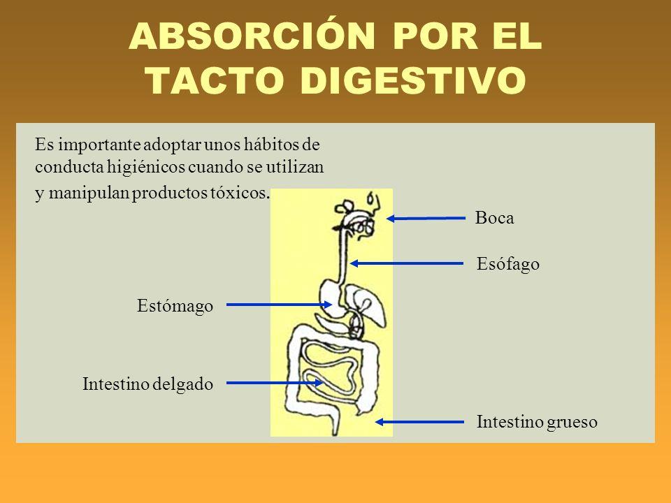ABSORCIÓN POR EL TACTO DIGESTIVO