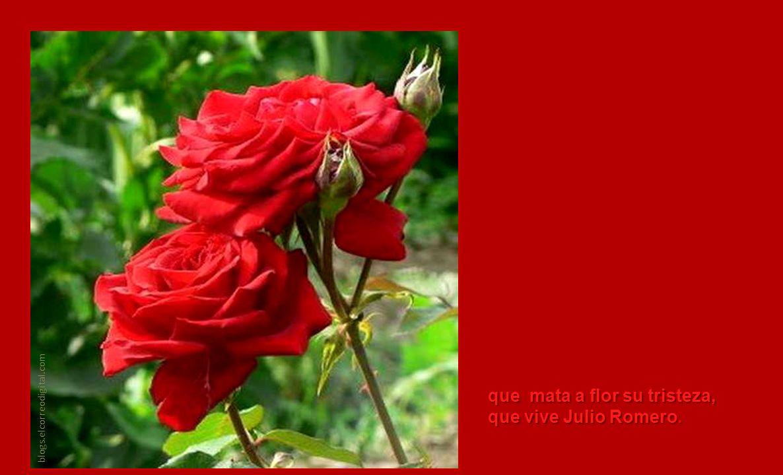 que mata a flor su tristeza, que vive Julio Romero.