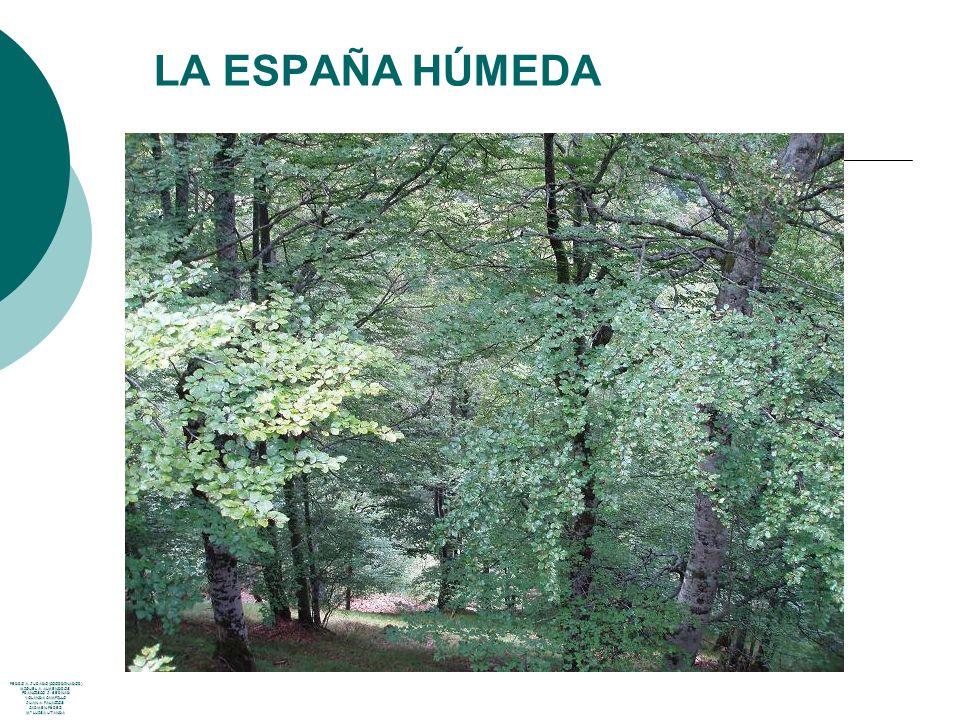 LA ESPAÑA HÚMEDA