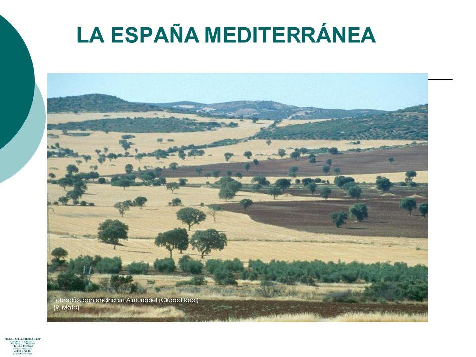 LA ESPAÑA MEDITERRÁNEA