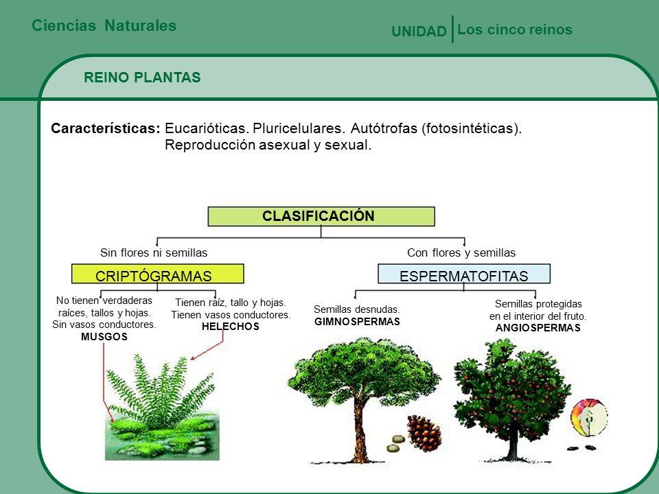 Ciencias naturales los cinco reinos unidad reino plantas for Los arboles y sus caracteristicas