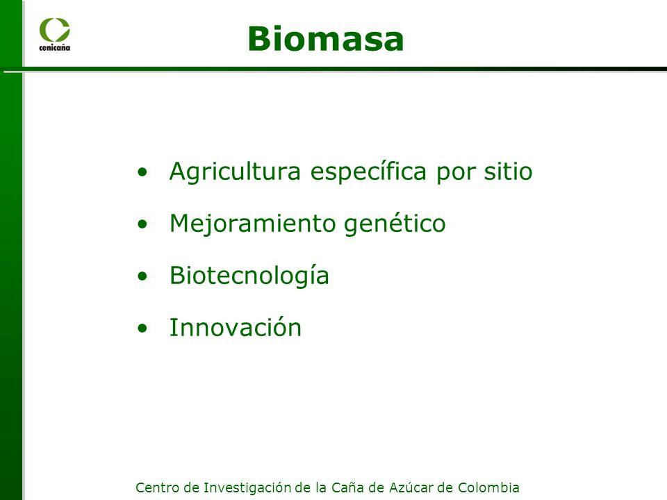 Biomasa Agricultura específica por sitio Mejoramiento genético