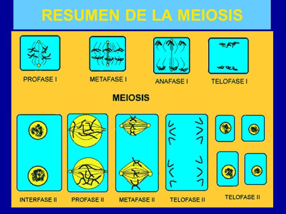RESUMEN DE LA MEIOSIS