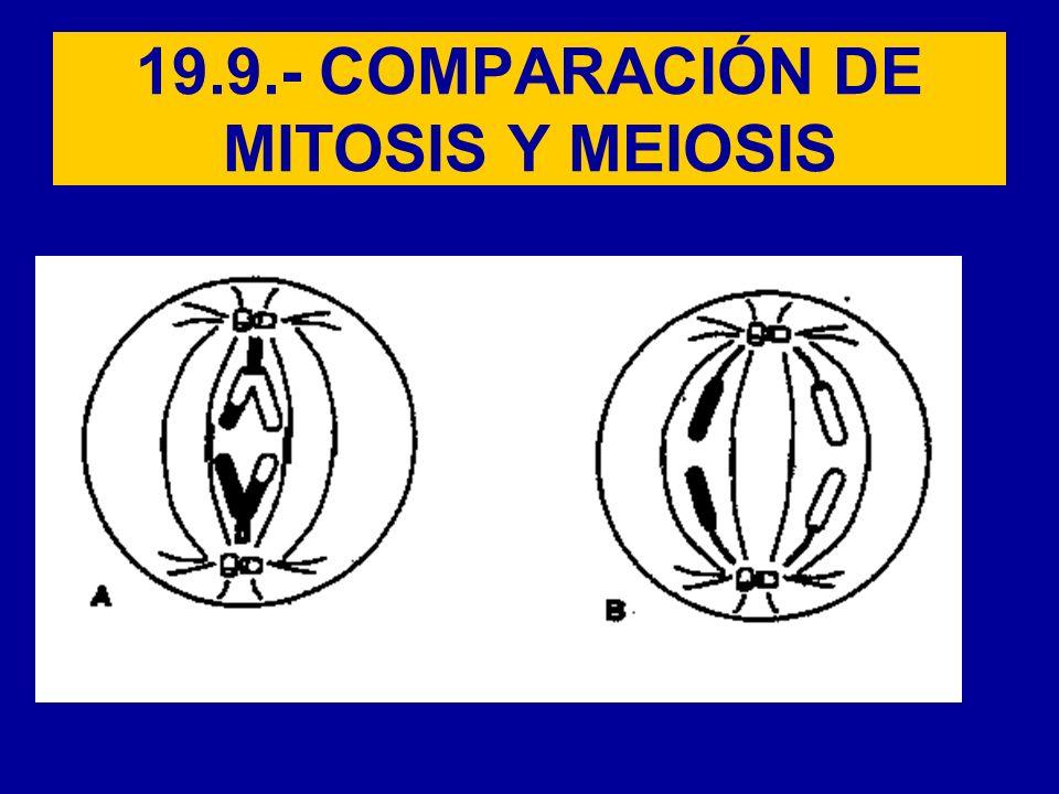 19.9.- COMPARACIÓN DE MITOSIS Y MEIOSIS