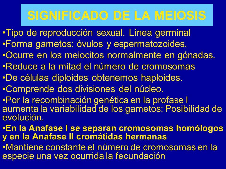 SIGNIFICADO DE LA MEIOSIS