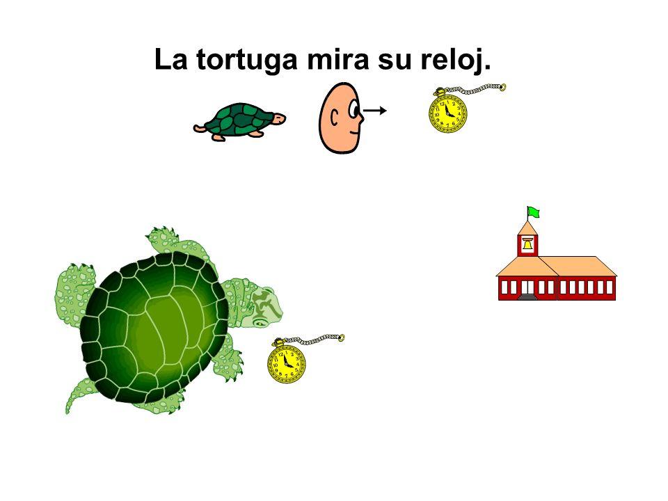 La tortuga mira su reloj.