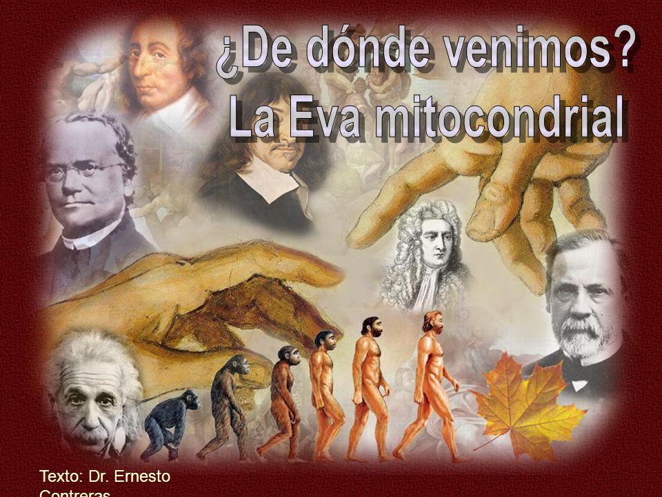 ¿De dónde venimos La Eva mitocondrial