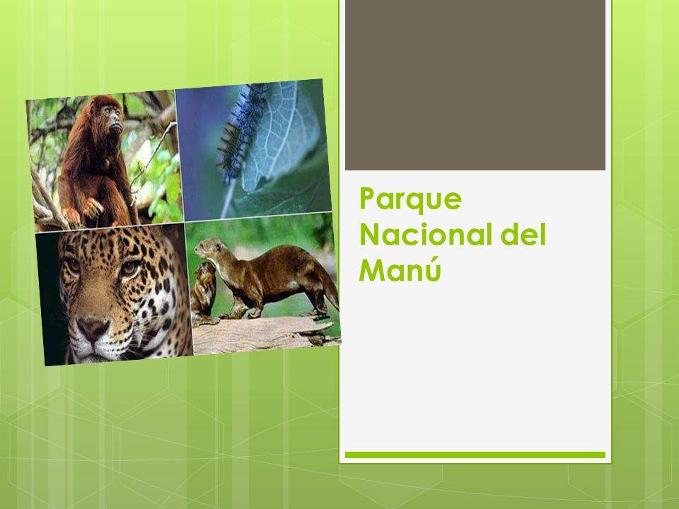 Parque Nacional del Manú