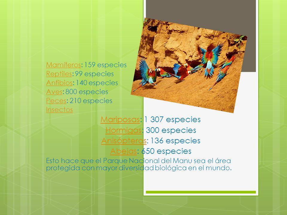 Anisópteros: 136 especies