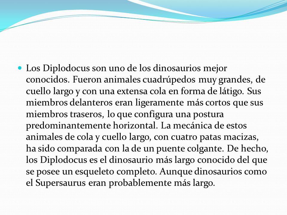 Los Diplodocus son uno de los dinosaurios mejor conocidos