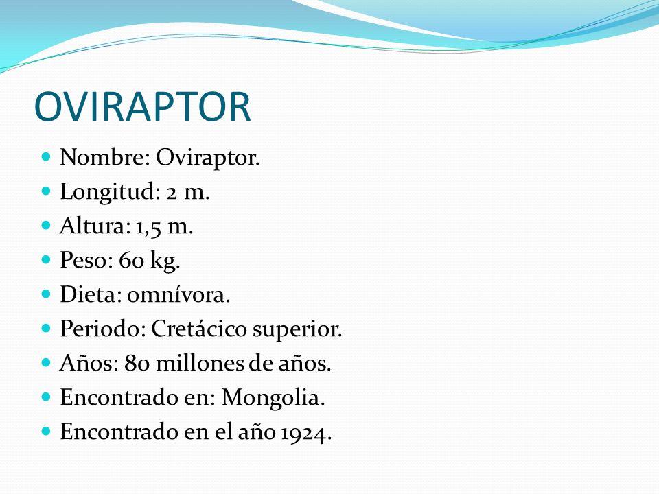 OVIRAPTOR Nombre: Oviraptor. Longitud: 2 m. Altura: 1,5 m.