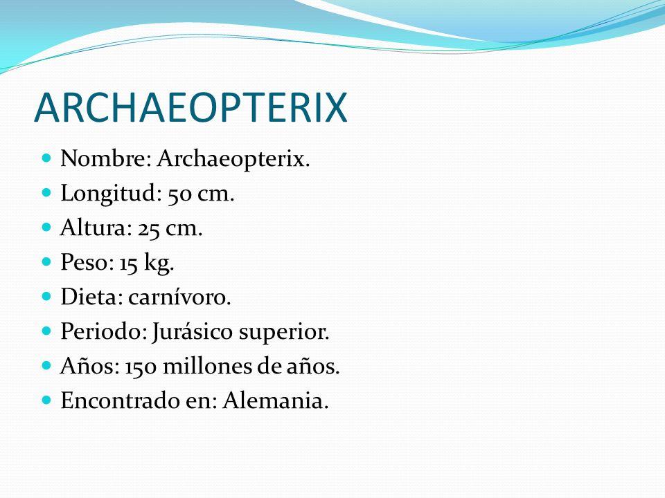 ARCHAEOPTERIX Nombre: Archaeopterix. Longitud: 50 cm. Altura: 25 cm.