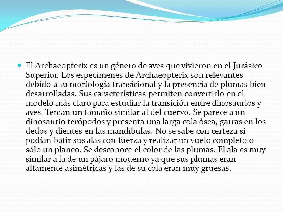 El Archaeopterix es un género de aves que vivieron en el Jurásico Superior.