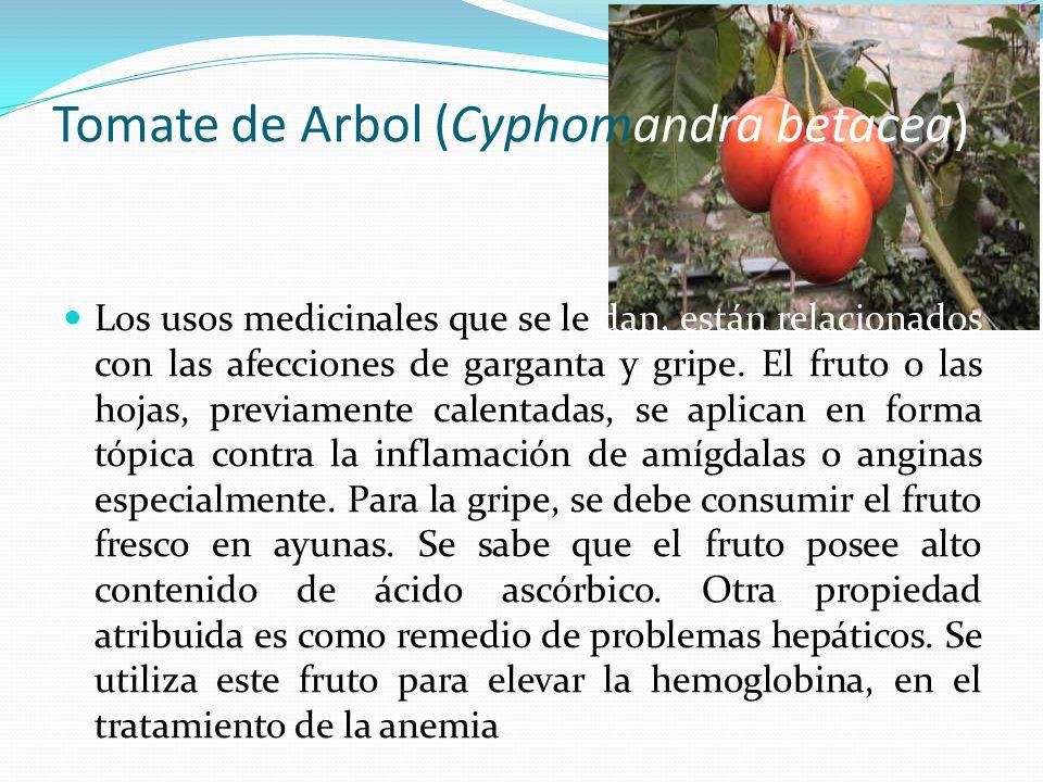 Tomate de Arbol (Cyphomandra betacea)