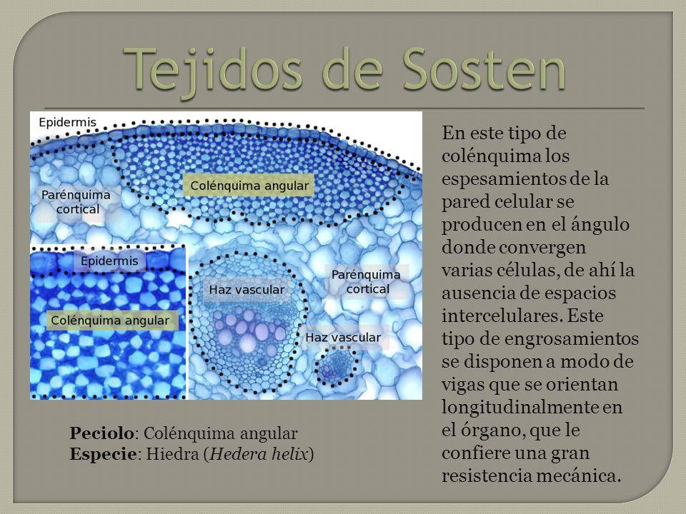 Tejidos de Sosten